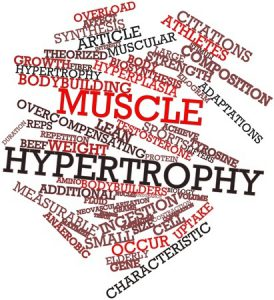 science and development of muscle hypertrophy epub